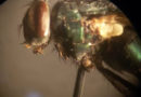 Forensic Entomology: Where Insects Meet the Law