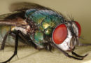 Could a Null-Hypothesis Model Bring Greater Clarity to Forensic Entomology?